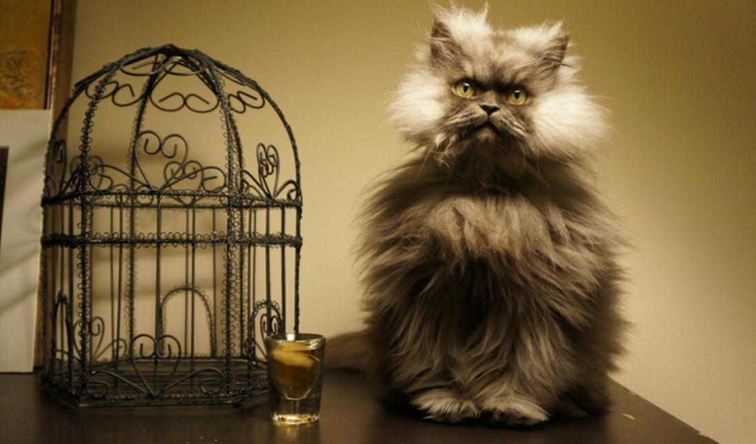 polkovnik-mjau-i-drugie-koty-rekordsmeny-1