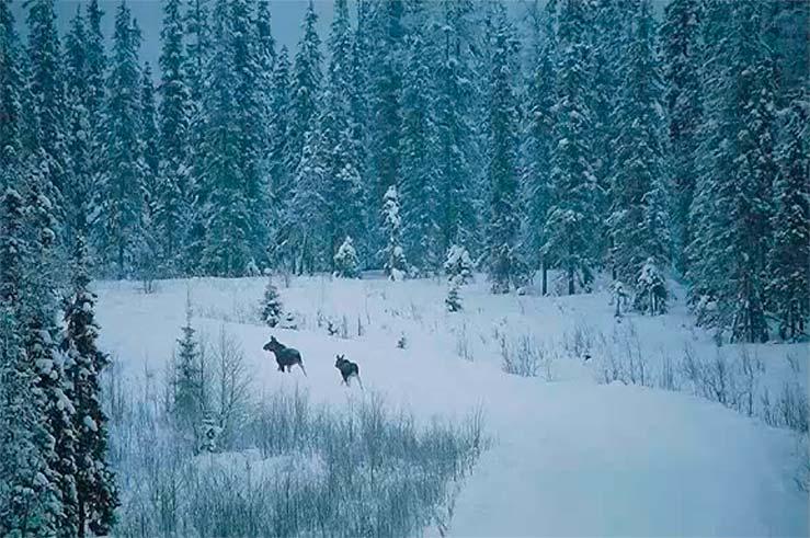 Фотографии с зимней тематикой дороже